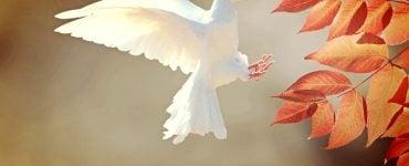 Άγιο Πνεύμα σε επισκιάζει