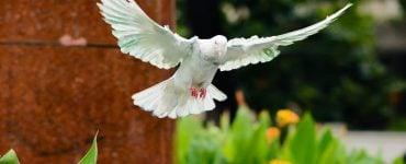 Προσευχή στο Άγιο Πνεύμα