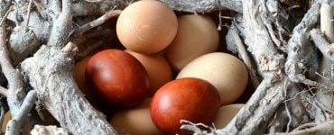 Πασχαλινά Αυγά Κόκκινα