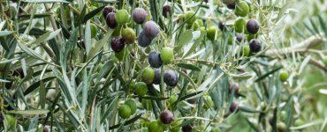 Ευλογία των καρπών της γης στην Κρήτη