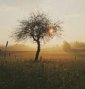 Τίποτε δεν αναπαύει τόσο πολύ την ψυχή όσο η πραότητα