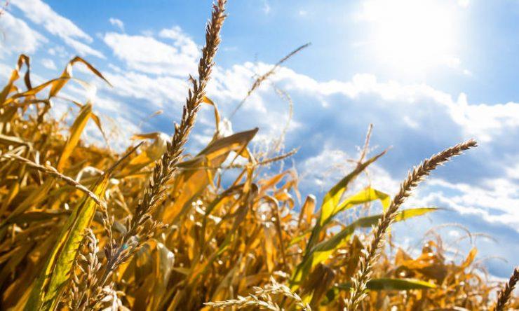 Ιερός Χρυσόστομος: Δώσε λίγο ψωμί και πάρε τον Παράδεισο